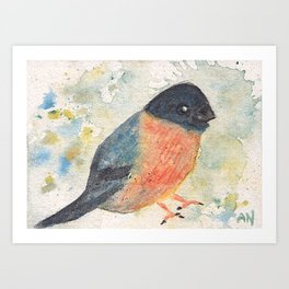 Bullfinch Bird Watercolor Art Print