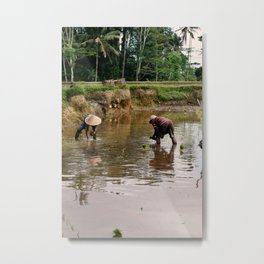 Bali, Rice Farmers Metal Print