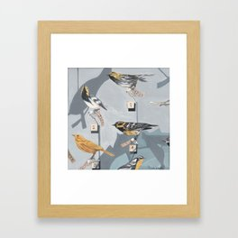 Warbler Exhibit Museum Birds Framed Art Print