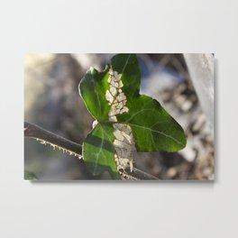 Ivy in Autumn Metal Print