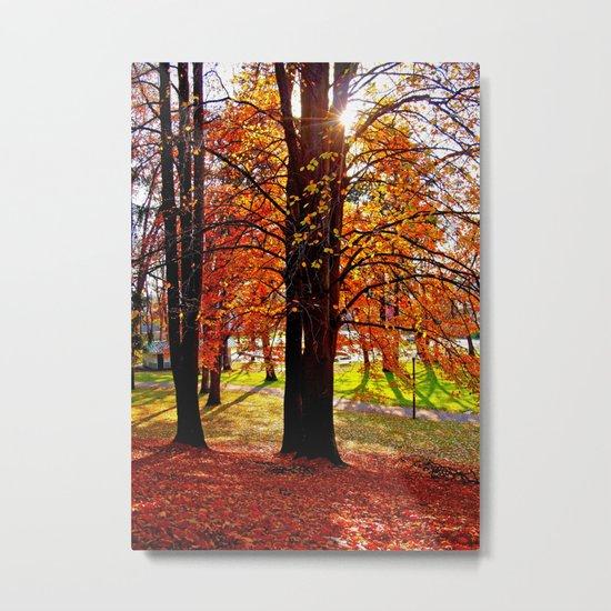 Autumn sunshine Metal Print