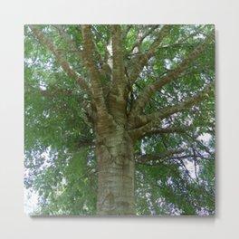 Wise Old Tree Metal Print