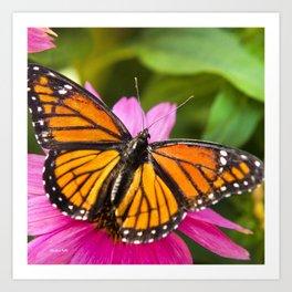 Orange Viceroy Butterfly Art Print