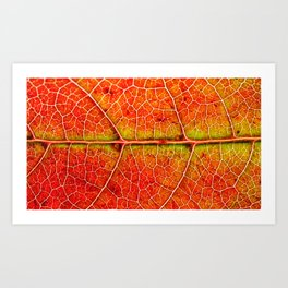 Maple Art Print