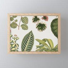 Botanical Green Plants Watercolor Painting Framed Mini Art Print