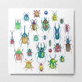 Colours of beetles Metal Print