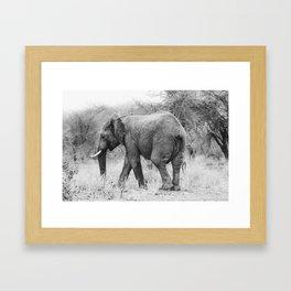 Elephant Tracks Framed Art Print