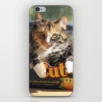 death cab for cutie iPhone & iPod Skins featuring Cutie by Cats in Boxes