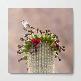 Watercolor Bird, Mockingbird 01, on Fruiting Saguaro Cactus, Ventana Canyon, Arizona Metal Print