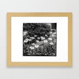flowers in the garden, june 2018 Framed Art Print