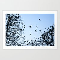 Coming Into Roost #2 Art Print