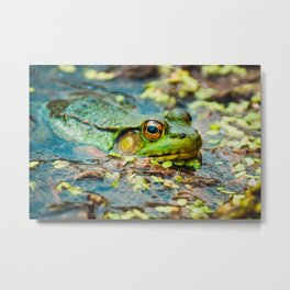 Happy Green Frog, Chilling In The Muck. Photograph Metal Print