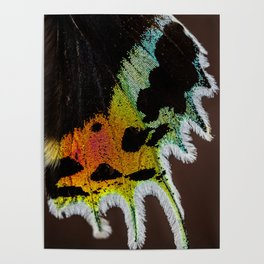 Wing of a Madagascan Sunset Moth, Shimmering with the Vivid Imagination of Nature Poster