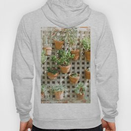 Wall of Succulent Plants Hoody