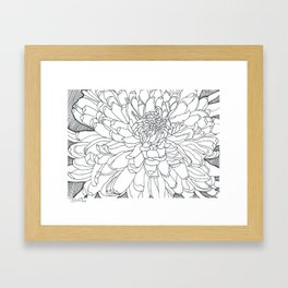 Japanese Chrysanthemum Framed Art Print