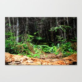The Yin and the Yang Canvas Print