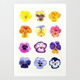 colorful pansies watercolor painting Art Print