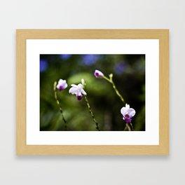 Dendrobium Bokeh Framed Art Print
