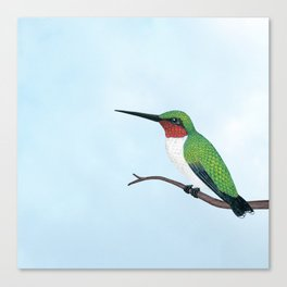 the studious male (ruby-throated hummingbird) Canvas Print