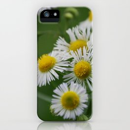 Miniature wild flower daisies in bloom iPhone Case
