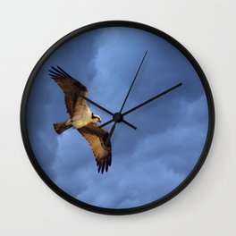 Osprey In Flight Wall Clock