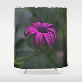 Has been a long day (African Daisy Flower) Shower Curtain