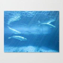 Ocean Blue Beluga Pairs Version 2 Canvas Print