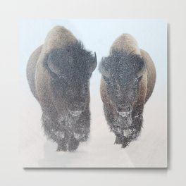 Two Bison In Snow Yellowstone in the Winter Metal Print