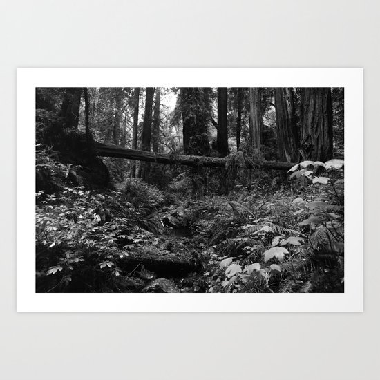 A Fallen Tree Art Print