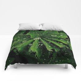 Dew On Rose Scented Geranium Leaves Comforters