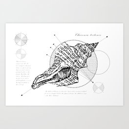 Geometry of a Charonia tritonis Art Print