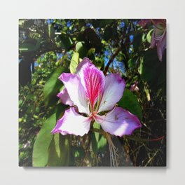 Orchid Glory Metal Print
