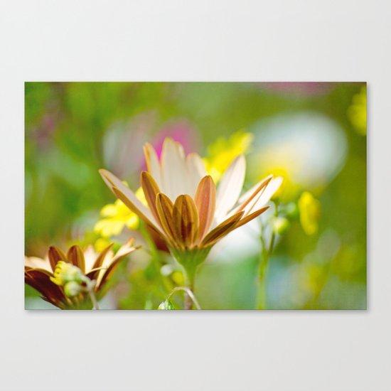 Pastel Meadow Canvas Print