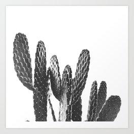 Cactus Photography Print {3 of 3} | B&W Succulent Plant Nature Western Desert Design Decor Art Print