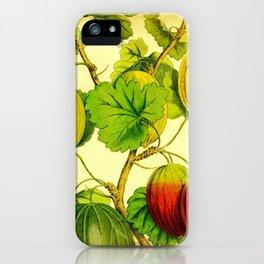 Golden Gooseberries iPhone Case