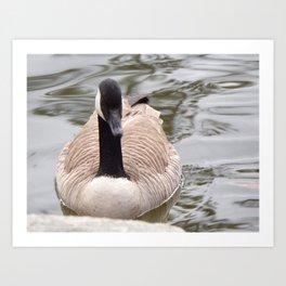 Beautiful Canadian Goose Swimming On Peaceful Pond Art Print