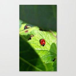 PLNPG   Lady Bug Canvas Print