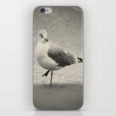 Beach Bird iPhone & iPod Skin