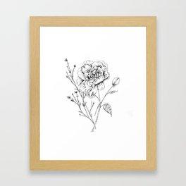 Peony Ink Drawing Framed Art Print