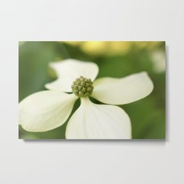 Four White Petals Metal Print