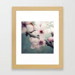 Spring blossom on rustic wooden table Framed Art Print