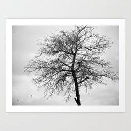 winter came Art Print