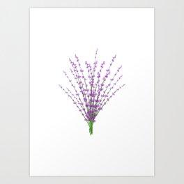 Lavender Bundle Art Print