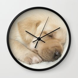 Sleeping labrador puppy Wall Clock