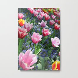 Tulips at the Keukenhof Metal Print