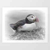 puffin Art Prints featuring Puffin by Lynn Bolt