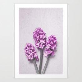 Pink Hyacinths Art Print