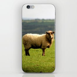 Solitary Sheep iPhone Skin
