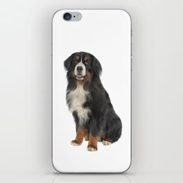 Bernese Mountain Dog. Drawing funny dog iPhone Skin