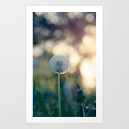 Dandelion blossom defocused seed head Art Print